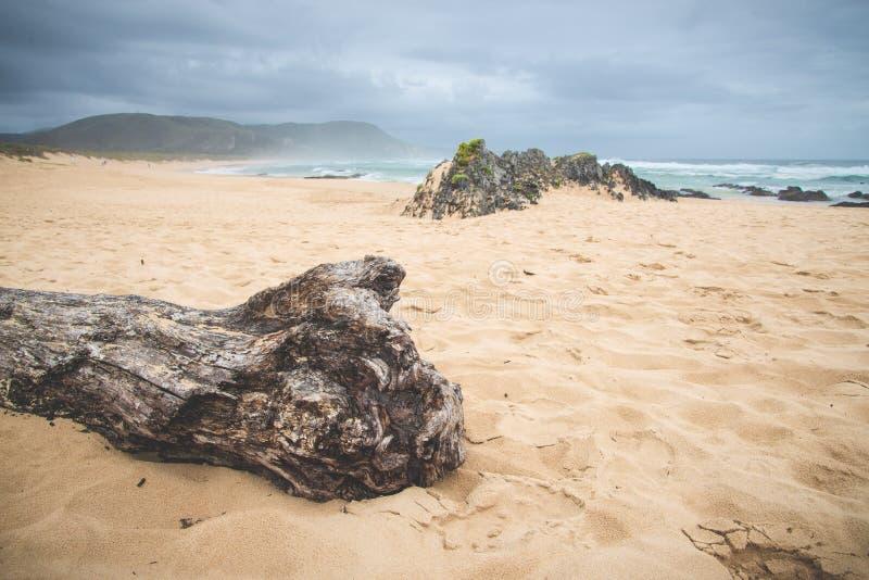 Madeira lançada à costa e montanhas misteriosas imagens de stock