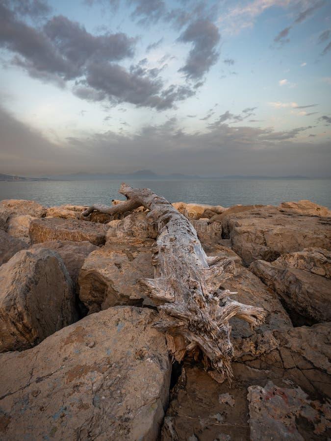 Madeira lançada à costa em pedregulhos, Posillipo, Nápoles, Itália no por do sol foto de stock