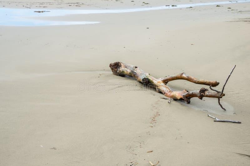 Madeira lançada à costa em um Sandy Beach imagem de stock