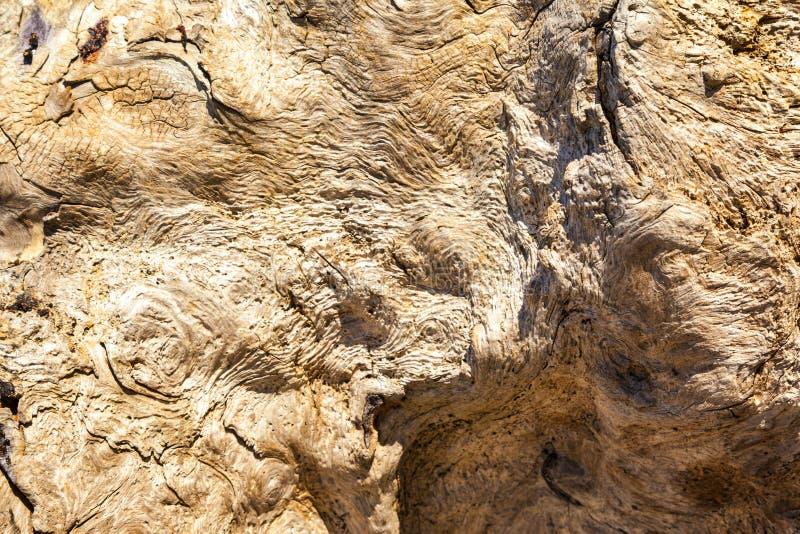 Madeira lançada à costa - fundo de um fim detalhado acima de um burl envelhecido da árvore com uma textura definida imagem de stock royalty free