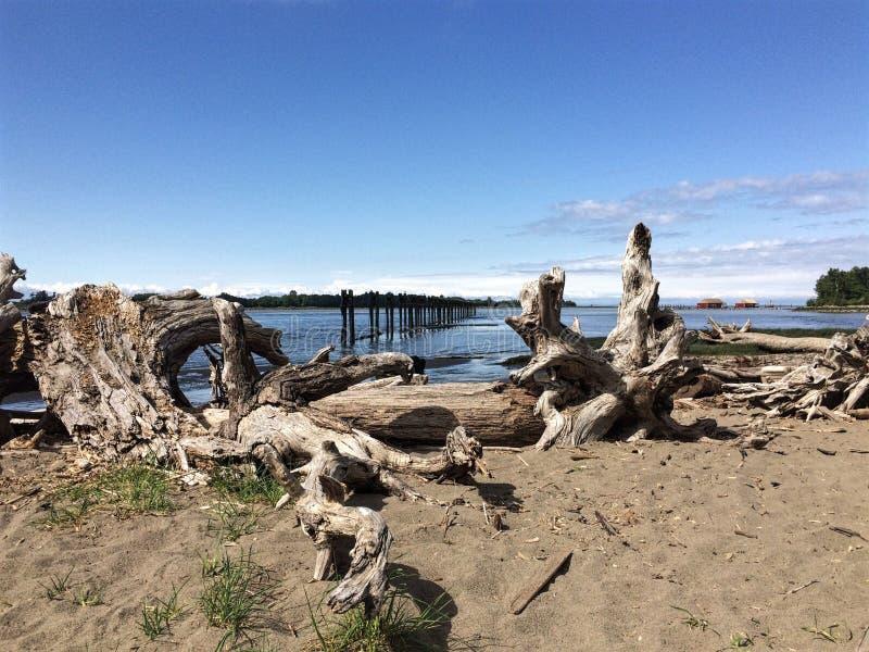 Madeira lançada à costa na praia, Fraser River, Richmond, BC fotografia de stock