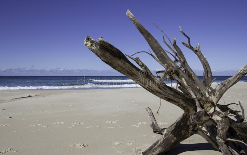 Madeira lançada à costa, praia de Blueys, NSW, Austrália fotografia de stock royalty free