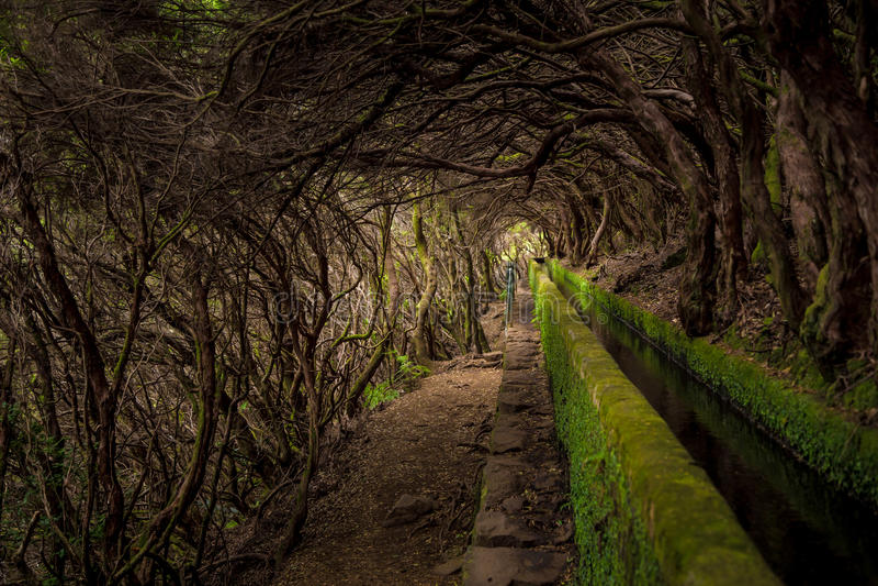 Madeira Levada. Levada Rabaçal (Levada des 25 fontes e risco) in Madeira island, Portugal royalty free stock images
