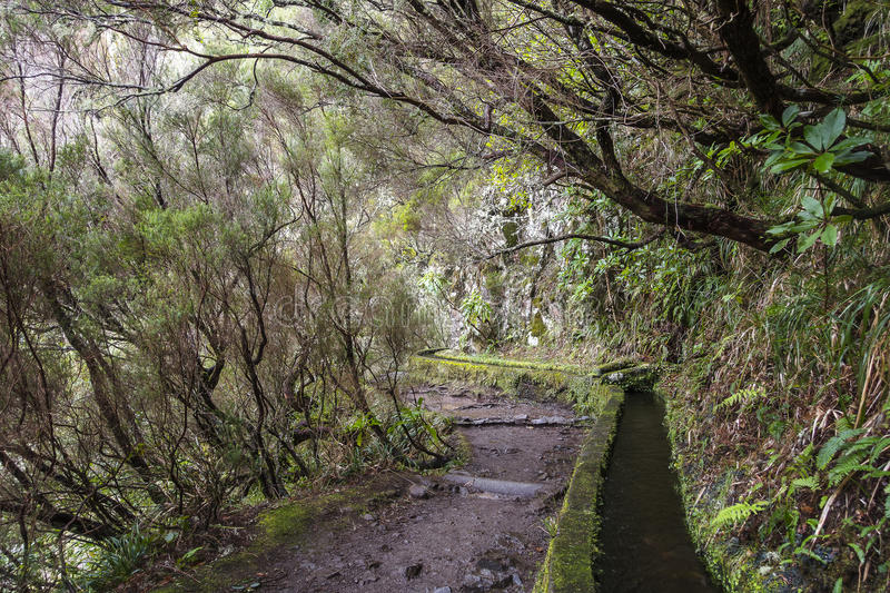 Madeira Levada stock images