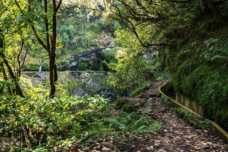 Madeira Levada walk path scenic royalty free stock photography