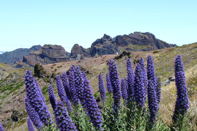 Madeira Mountains. Rocky mountains of Madeira island Photo taken on: March 07th, 2010 royalty free stock photography