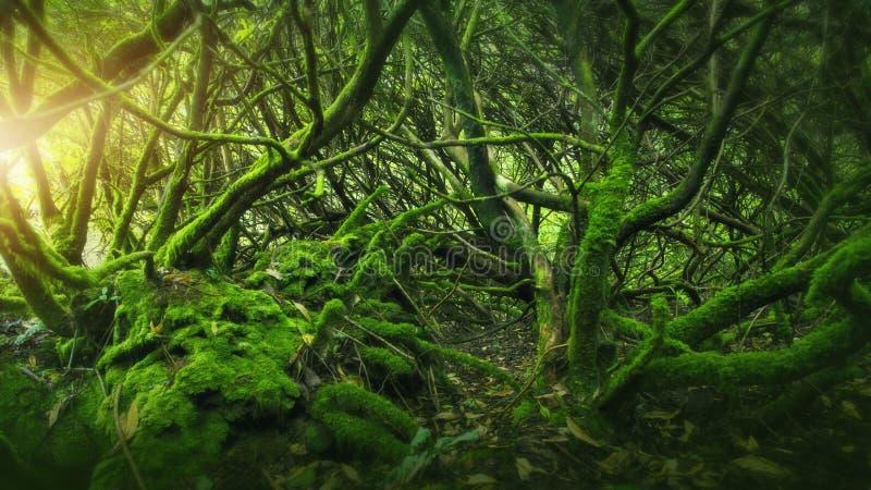 Madeira musgoso na Irlanda fotografia de stock