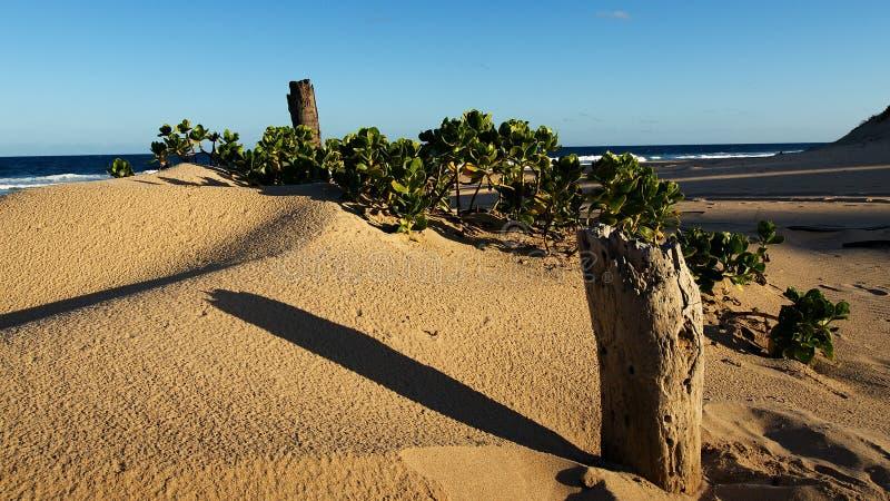 Madeira na areia imagem de stock