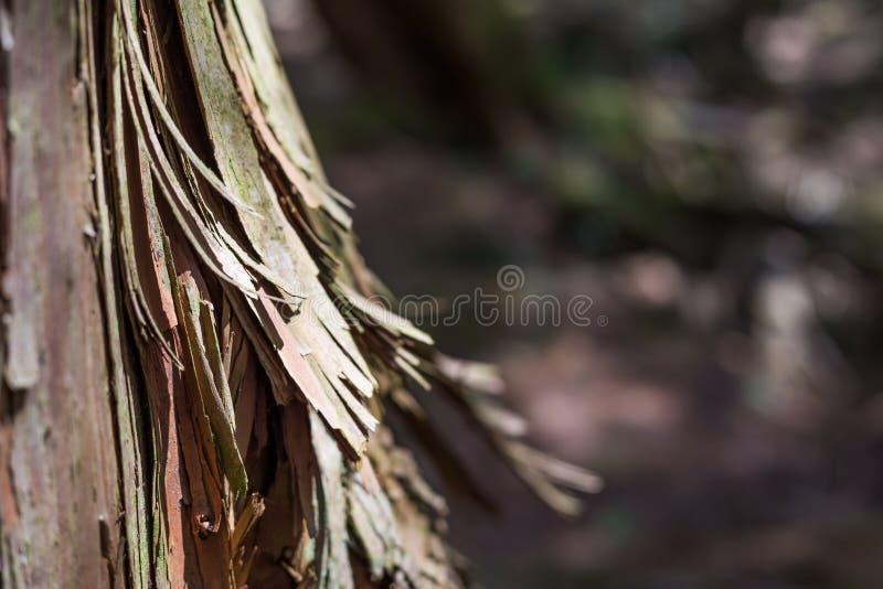 madeira na floresta do suic?dio imagem de stock royalty free