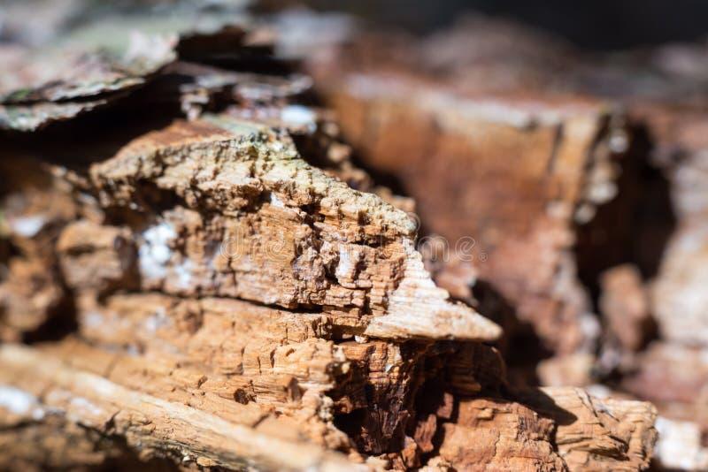 madeira na floresta do suic?dio fotos de stock