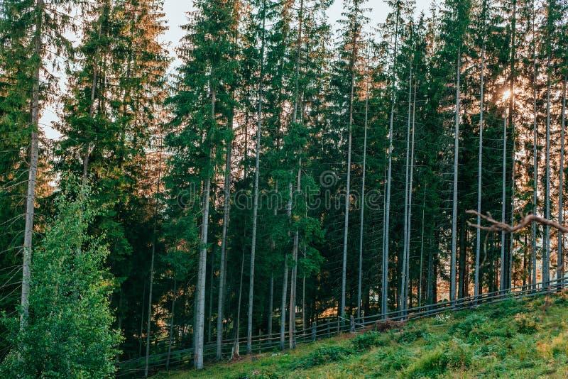 Madeira nas montanhas imagens de stock