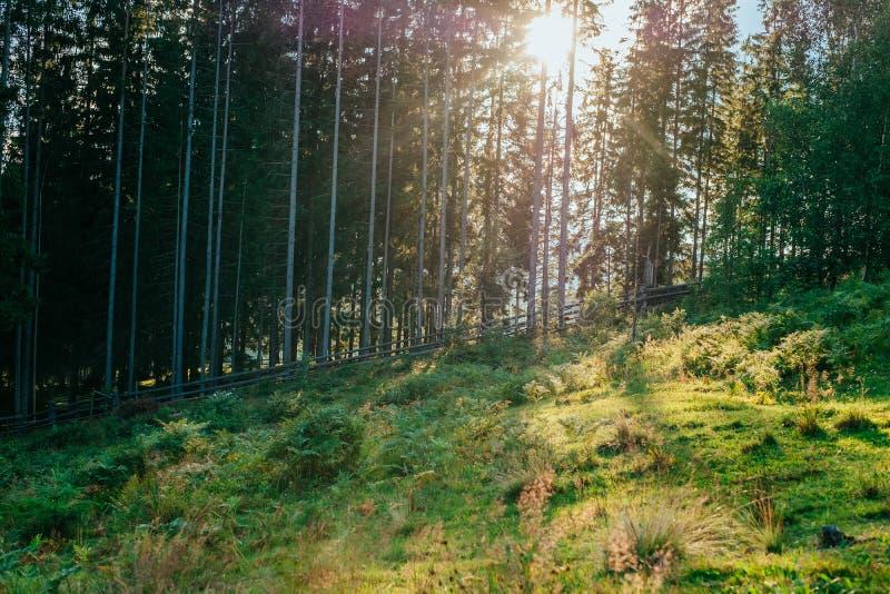 Madeira nas montanhas imagem de stock royalty free