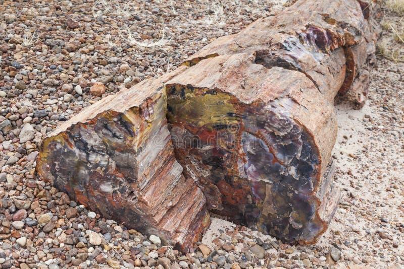 Madeira Petrified foto de stock