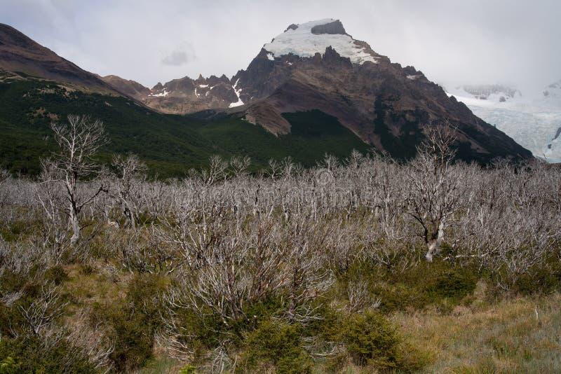 Madeira queimada e inoperante em um vale da montanha imagens de stock royalty free