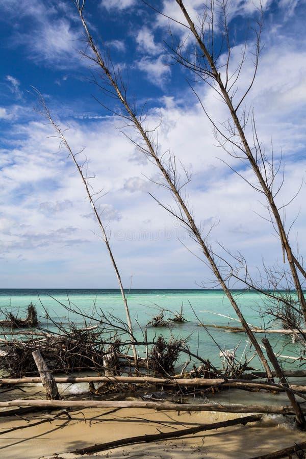 Madeira seca na costa das Caraíbas foto de stock