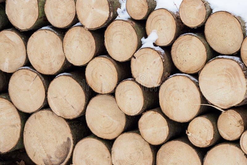 Madeira Spruce no fundo fotografia de stock royalty free