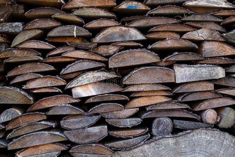 Madeira Spruce no fundo fotos de stock royalty free