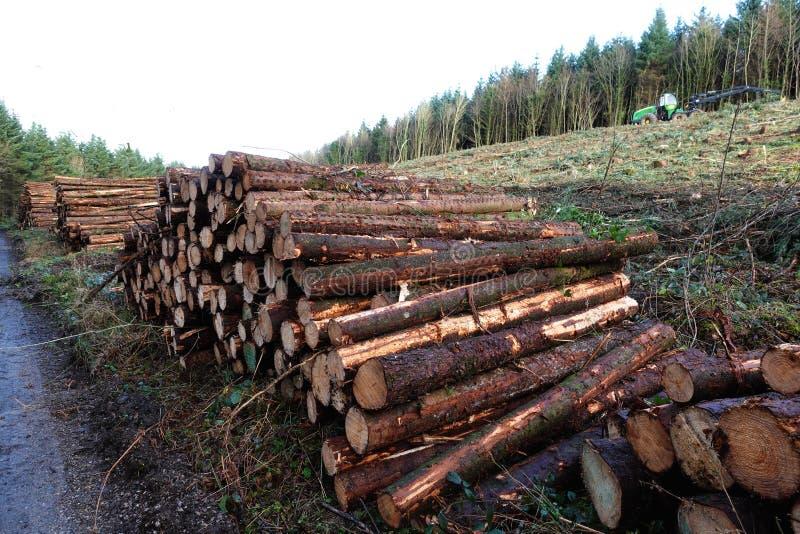 Madeira Spruce que entra a floresta fotografia de stock