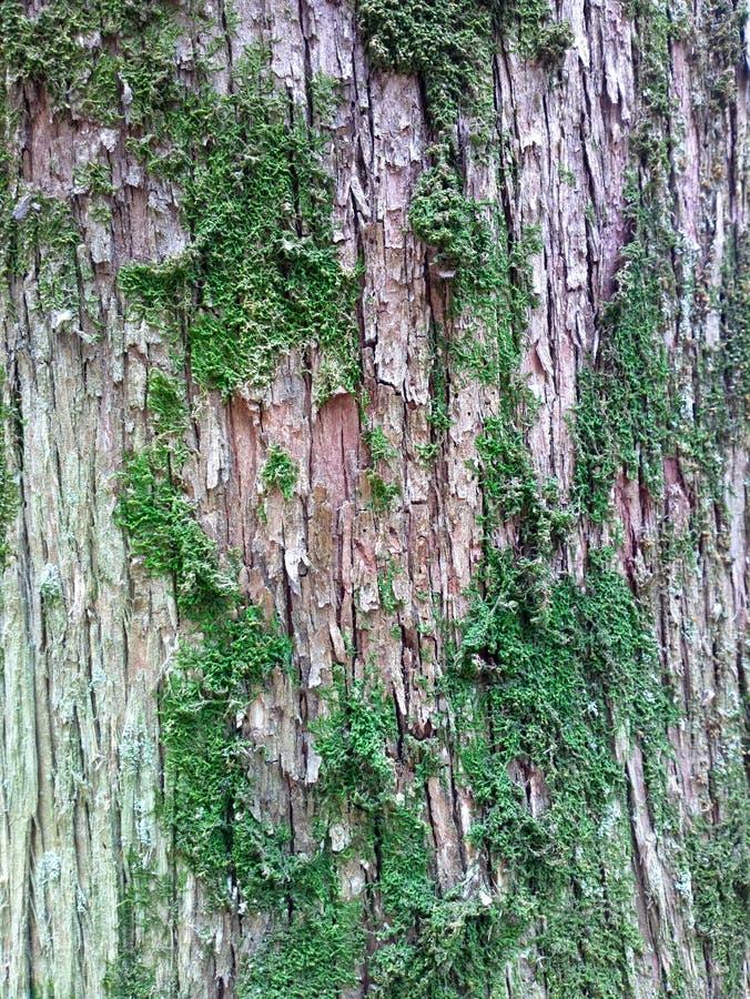 Madeira sul do fundo do eco da casca e do musgo imagens de stock
