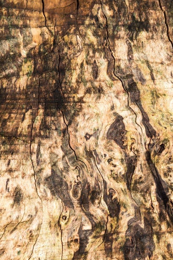 Madeira Textured foto de stock