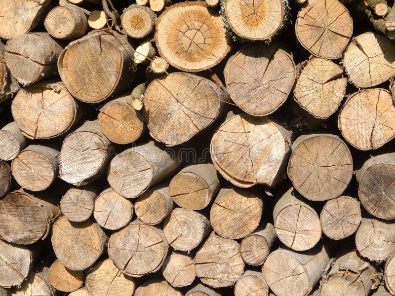 Madeira Um tronco imagens de stock