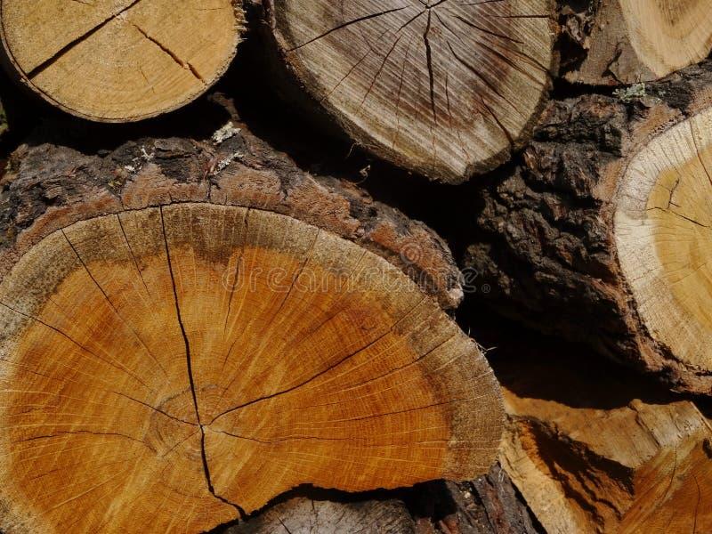 Madeira Um tronco imagem de stock royalty free