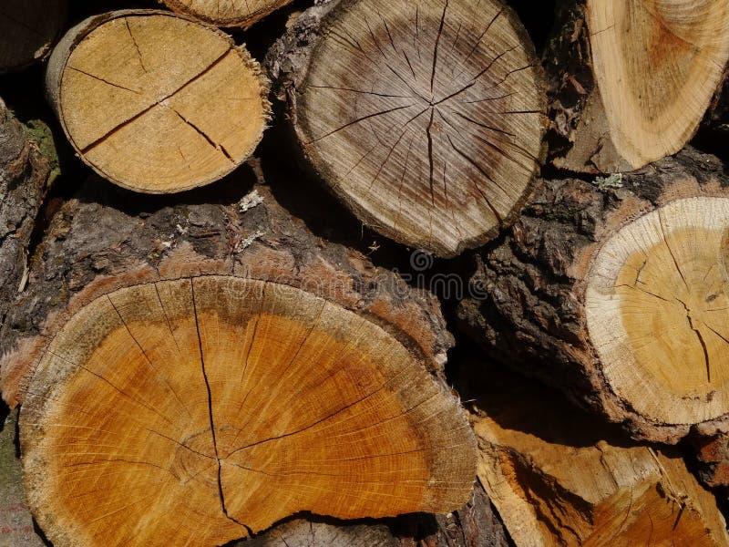 Madeira Um tronco fotografia de stock royalty free