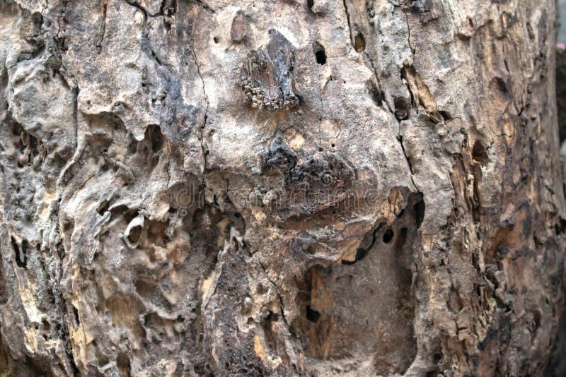 Madeira velha de madeira deteriorada imagem de stock