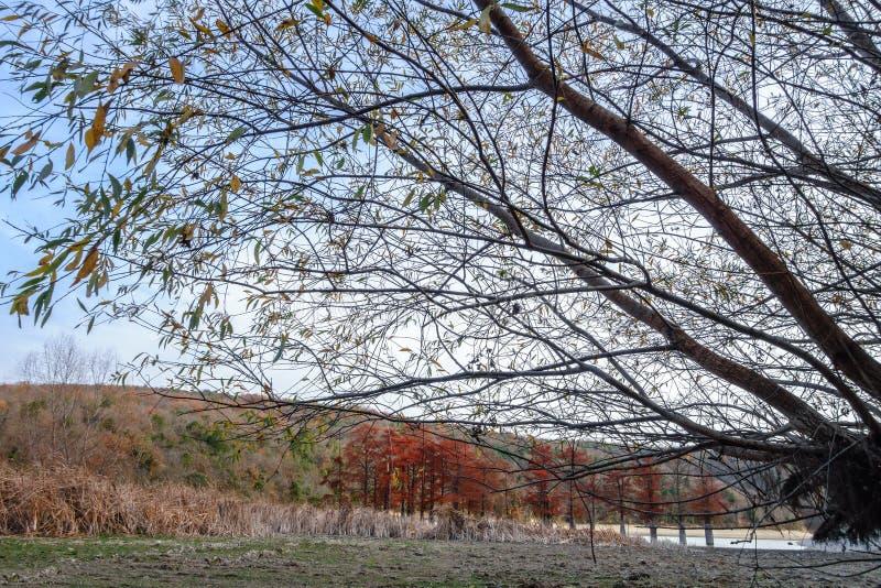 Madeira vermelha bonita do cipreste no lago da montanha em Sukko por Anapa, Rússia Paisagem c?nico do outono Montanhas de C?ucaso foto de stock