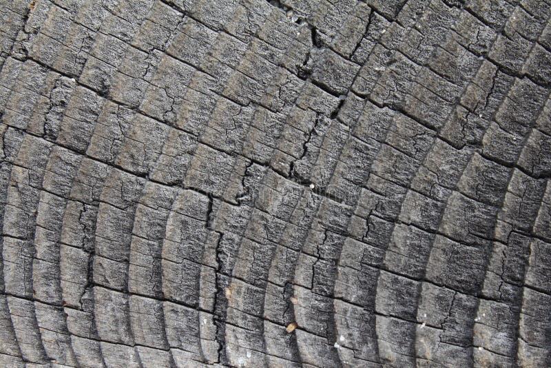 Download Madeira Withered imagem de stock. Imagem de sumário, cinzento - 12800359