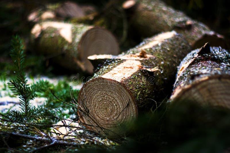 madeiras imagem de stock