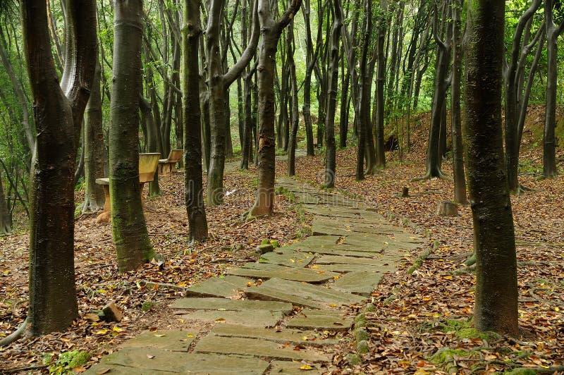 madeiras após a chuva imagem de stock royalty free