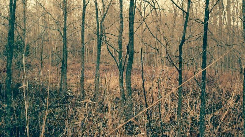 Madeiras da caça de Michigan calmas fotografia de stock royalty free