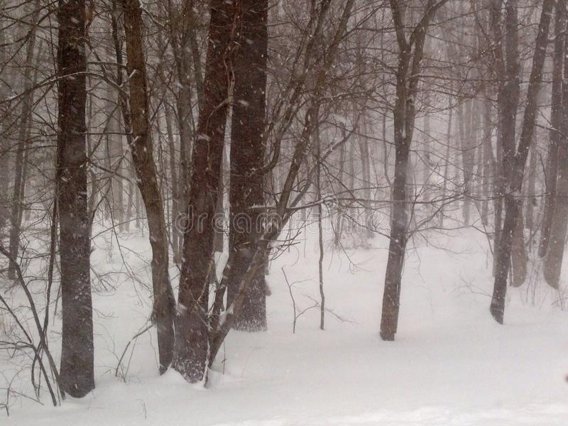 Madeiras do inverno imagens de stock
