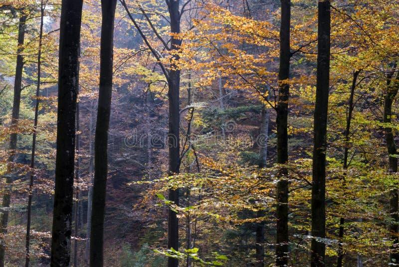 Madeiras do outono foto de stock royalty free