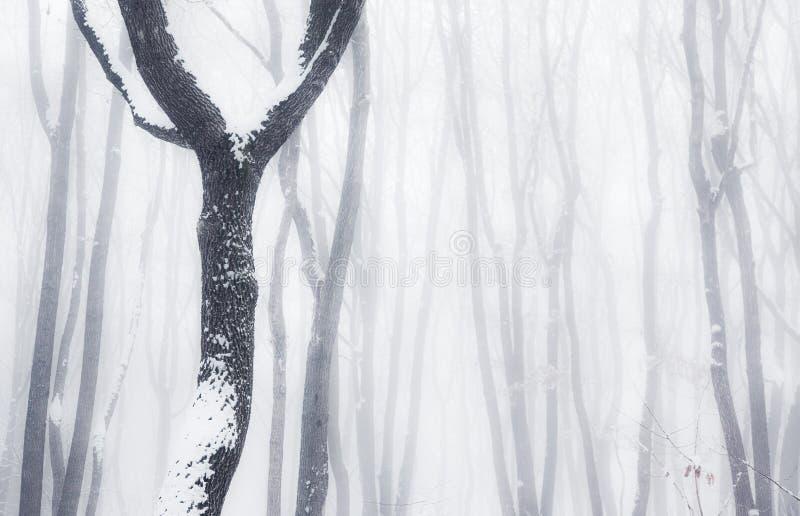 Madeiras enevoadas do inverno imagem de stock