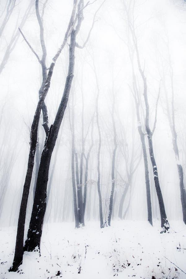 Madeiras enevoadas do inverno foto de stock royalty free