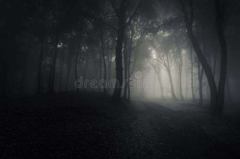 Madeiras escuras profundas na noite de Dia das Bruxas fotografia de stock royalty free