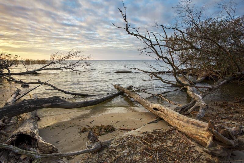 Madeiras lançadas à costa Ramos de árvore cinzentos que encontram-se sobre a água, wo inoperante seco foto de stock