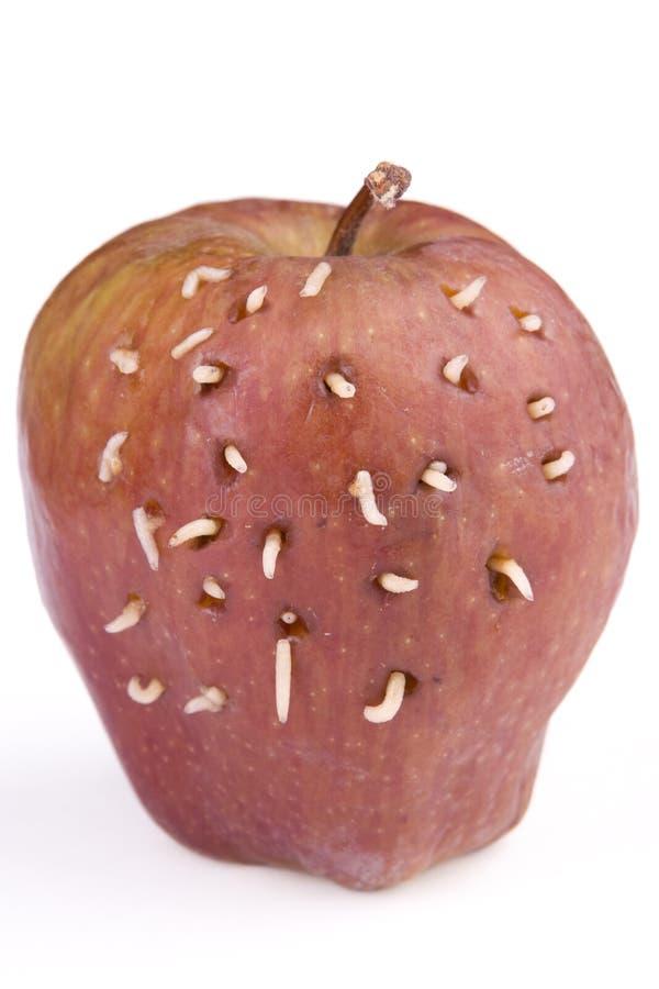 Maden auf Apfel stockbild