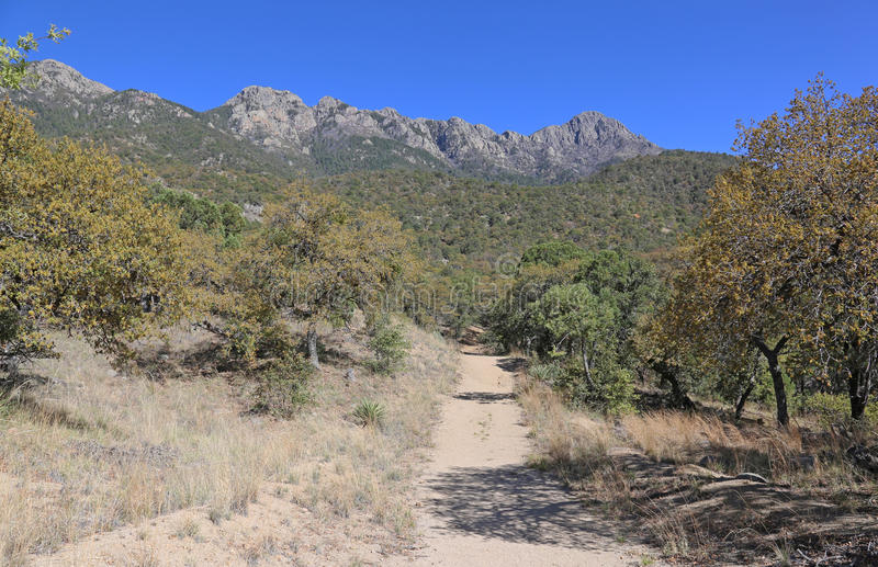 Madera Canyon Trail. A trail in Madera Canyon, in the Santa Rita Mountains, located in Arizona, United States royalty free stock images