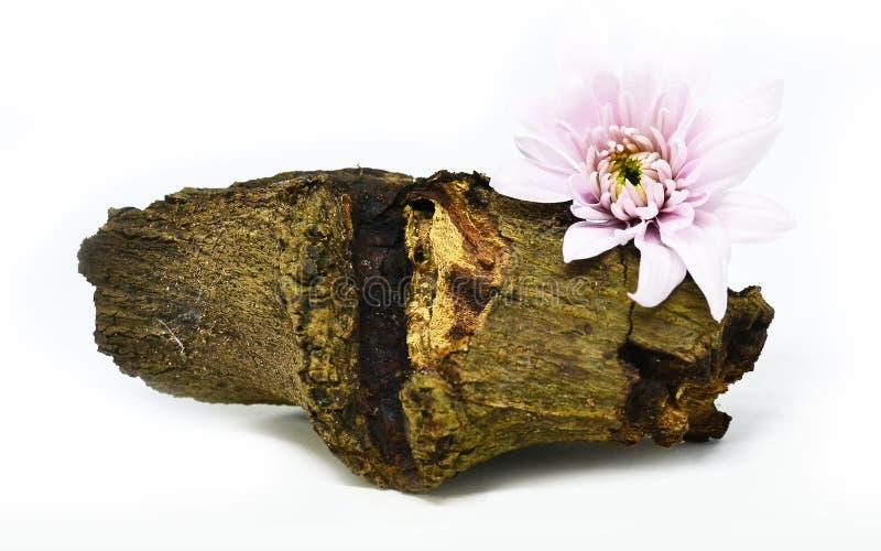 Madera con la flor fotografía de archivo