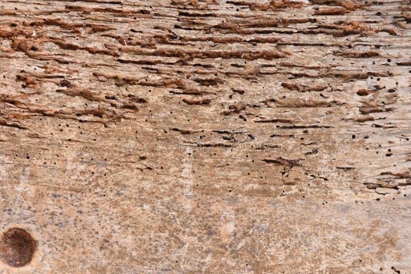 Madera con las termitas fotos de archivo