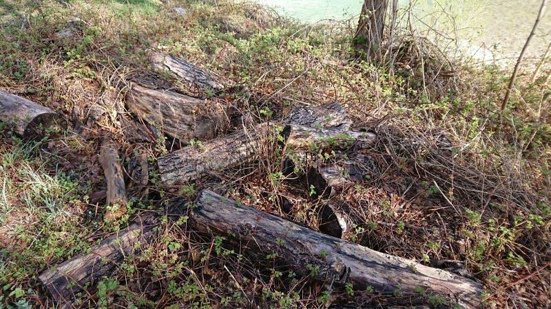 Madera cortada vieja por un río imagenes de archivo