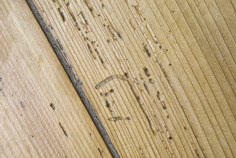Madera dañada por el woodworm fotografía de archivo