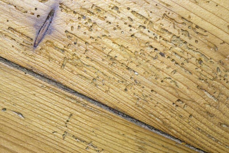 Madera dañada por el woodworm imágenes de archivo libres de regalías