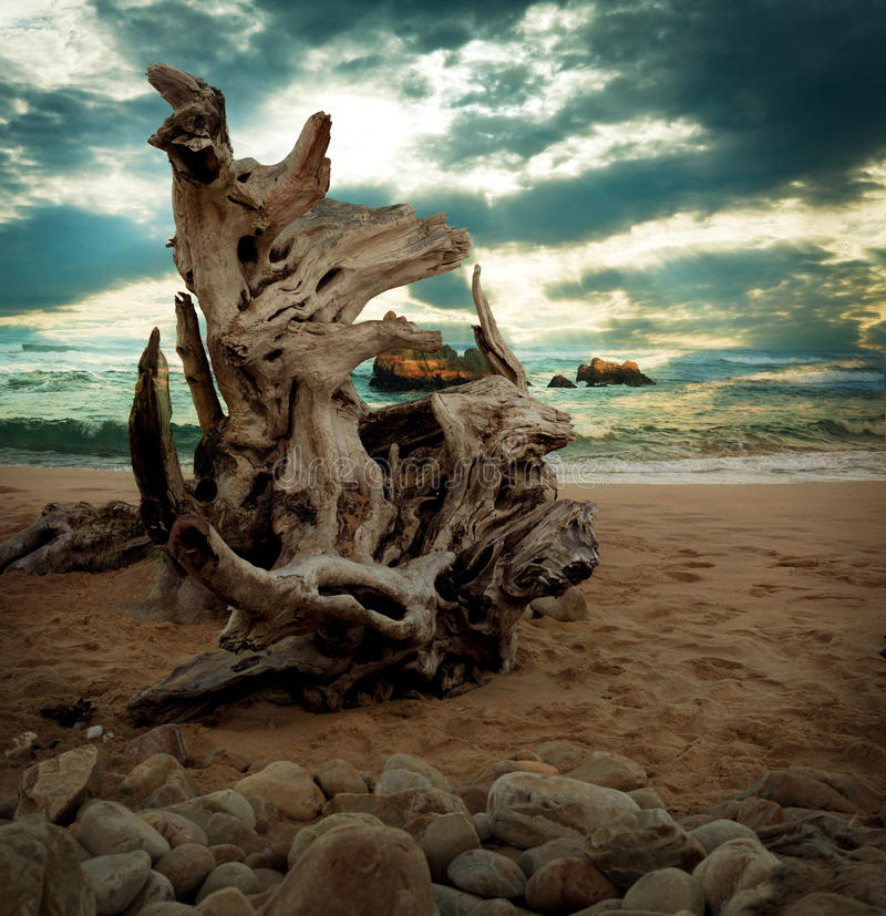 Madera de deriva del paisaje marino en la playa imagen de archivo