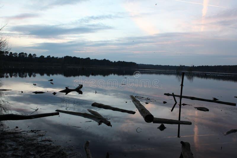 madera de deriva en el lago imagenes de archivo
