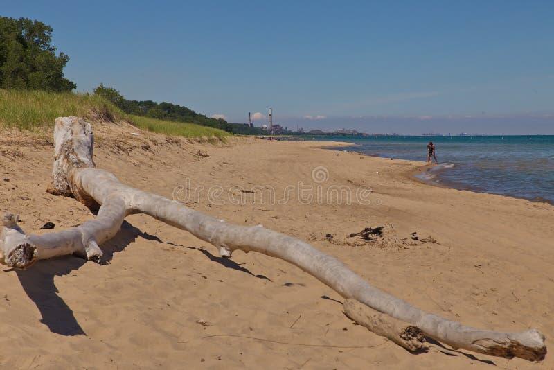 Madera de deriva en Indiana Dunes State Park Beach imagen de archivo
