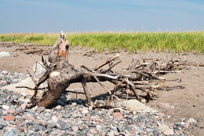 Madera de deriva en la playa con las rocas y la hierba del mar fotos de archivo